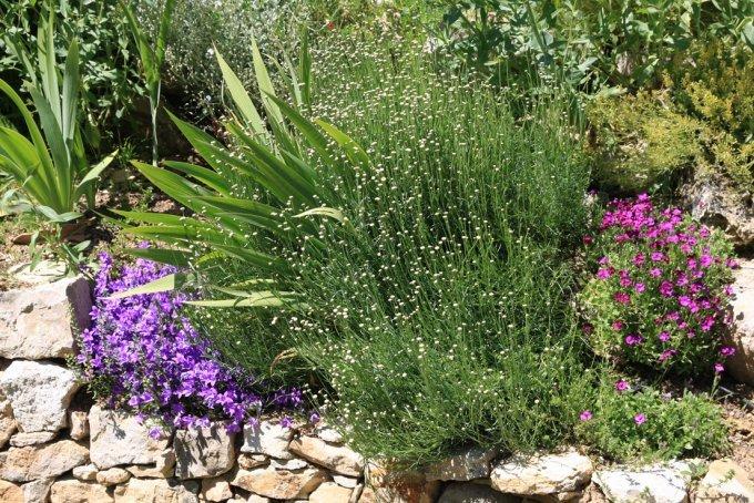 les plantes du mur et de la rocaille jardins de pierres. Black Bedroom Furniture Sets. Home Design Ideas
